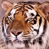TigerRD