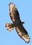 Eagle71